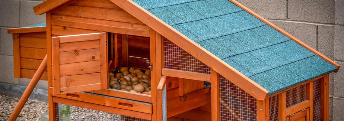 Abris pour poules